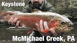 WB - Fly Fishing Keystone Select, McMichael Creek, PA - May '18