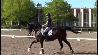 lafontenas mg small tour dressage horse for sale
