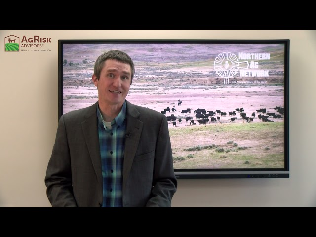 Includes August Video Sales and Cattle Fax 2022 Analysis - August 31st
