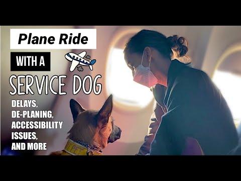 Service Dog Liability Insurance
