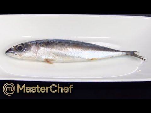 Identifying 20 Fish!   MasterChef Australia