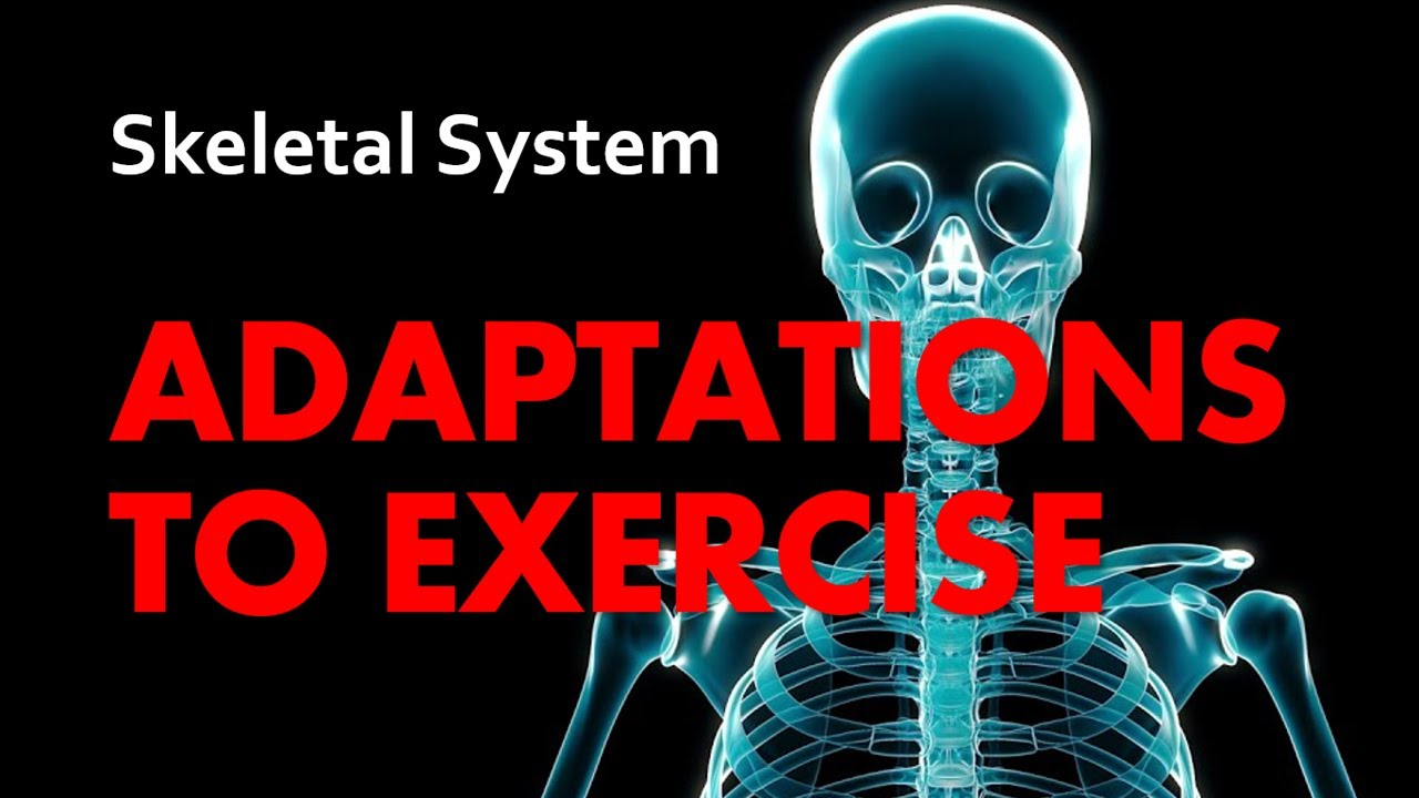 Anatomy & Physiology | Adaptations to Exercise: The Skeletal System ...