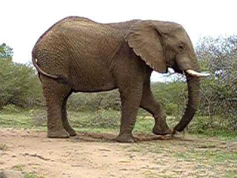 Sand shower of an Elephant, Durban, South Africa 2007
