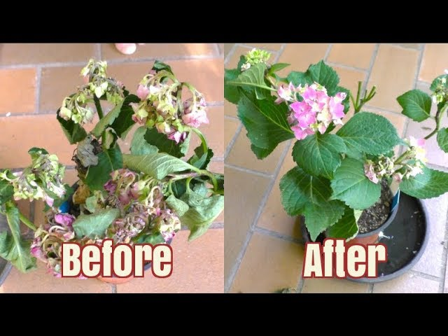 How To Bring A Plant Back To Life In 12 Hours Youtube,Paper Easy Diy Christmas Decorations For Kids