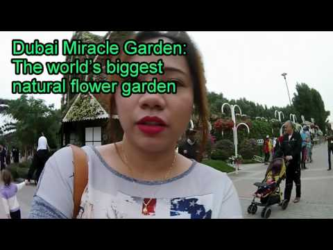 Dubai Miracle Garden: The world's biggest natural flower garden : VLOG # 16 @ Sharpcookie10