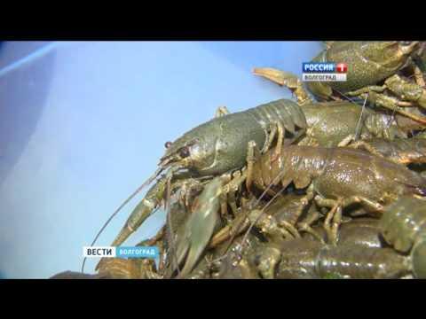 Рейд по точкам продажи раков в Волгограде
