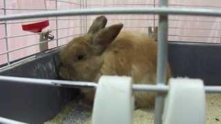 Выставка кроликов - Омск 2 февраля 2014 года(, 2014-02-03T02:31:31.000Z)