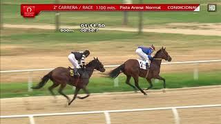 Vidéo de la course PMU PREMIO ELENA CAFFARENA