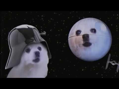 Funny Vine| Dog Sings Star Wars Song