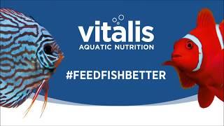 Vitalis英國海水飼料-海博館餵食影片