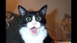 Смешные Котики и Коты. Приколы с Животными   Сайты для Заработка на Автомате