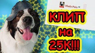 КЛИП на 25000 подписчиков!!! Собака-медведяка Московская сторожевая Булат Говорящая собака