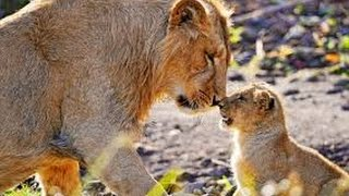 22 powerful moments expressing mother's love among animals