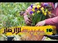 10 نصائح لزيادة الإزهار في النباتات
