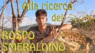 Alla ricerca del Rospo smeraldino (Bufotes balearicus)