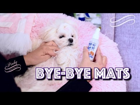 GROOMING: Maltese & MATS MATS MATS ~~ HOW to SAFELY Remove a MAT on Dogs Sensitive Areas말티즈