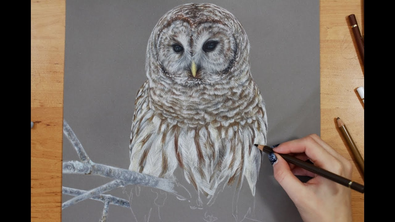 This is a picture of Sizzling Barred Owl Drawing
