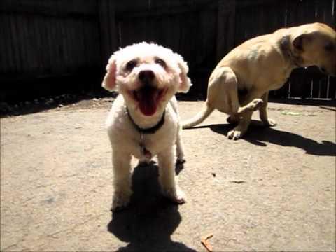 Rochester Canine Academy - June 18, 2011