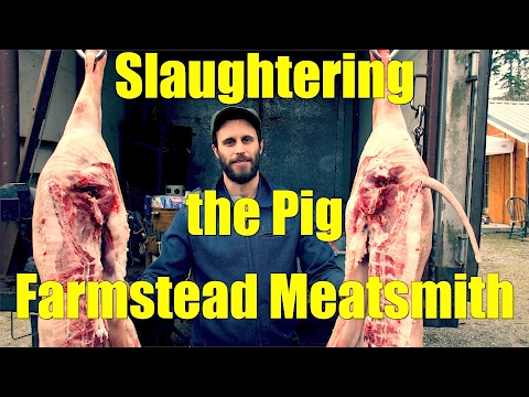 Slaughtering the Pig - The Farmstead Meatsmith Complete Harvest Course - Day 1