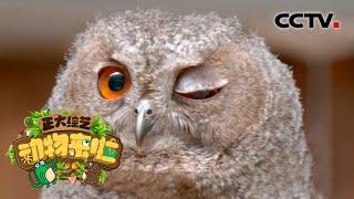 [正大综艺·动物来啦]鸟类刚出生时看到稳定移动的玩具车 也会把它当作亲鸟跟随| CCTV