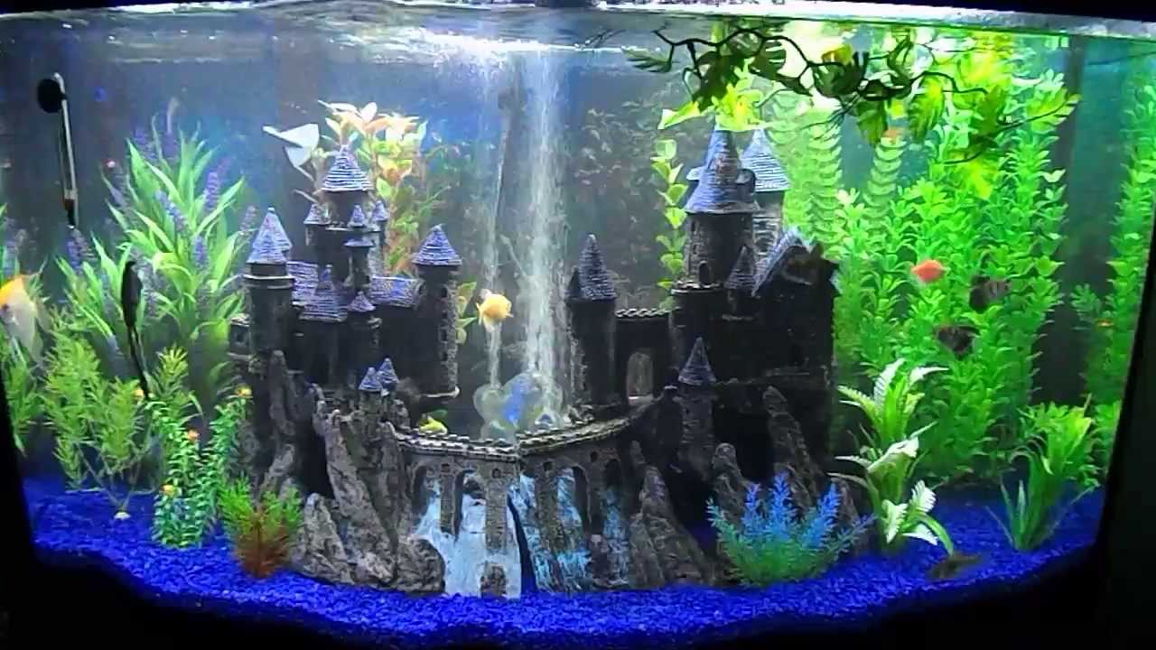 My new 46 gallon bow front aquarium youtube for 38 gallon fish tank