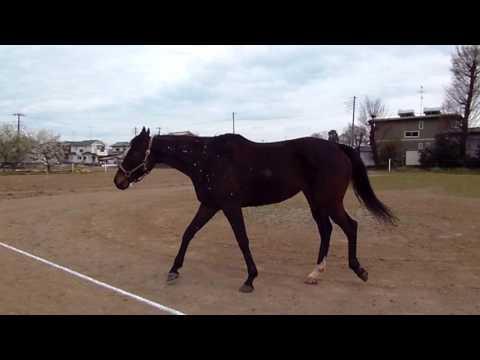 競馬第二のストーリーウオッカの近親タニノセレナーデ ぬくもりある手作り牧場での日々netkeibacom