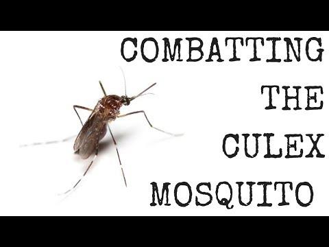 Combatting The Culex Mosquito