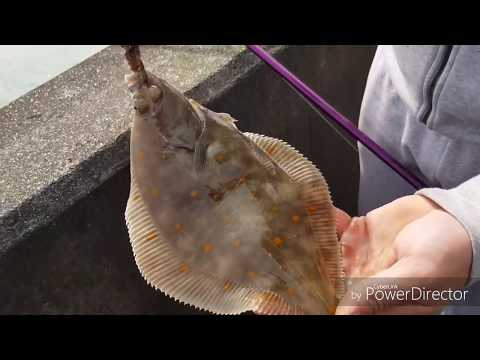 Poole Harbour Flounder And Brighton Marina Plaice Sea Fishing