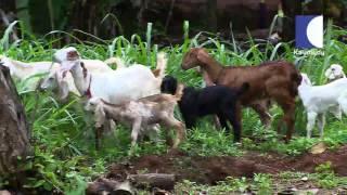 Haritham Sundaram Angel Juliyas's All in One Farm 28/06/2016