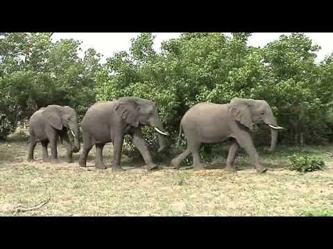 Compilatie Botswana