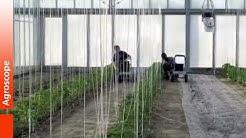 Gemüsebauforschung Agroscope Conthey