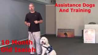 Isaiah & Samson: Assistance & Service Dogs Trained To Do Amazing Things