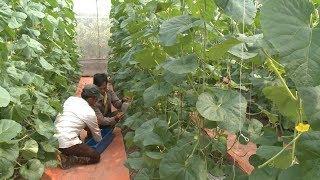 Thực hiện nghị quyết : Huyện Phù Cừ chuyển đổi cơ cấu cây trồng, nâng cao giá trị sản xuất