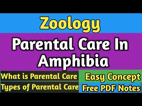 Zoology |Parental Care In Amphibia| Amphibia | BSc