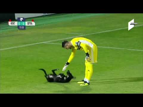 Dog invades soccer pitch, only wants belly rubs, thanks