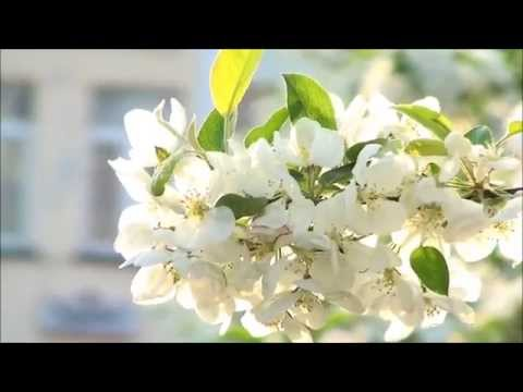 Beautiful Flowers Blooming HD Nature Video - 1