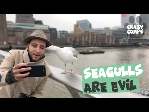 Seagulls are Evil   Seagulls Being Jerks Compilation 2018