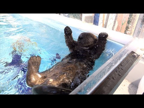 Orphaned sea otter pup arrives at the Oregon Zoo