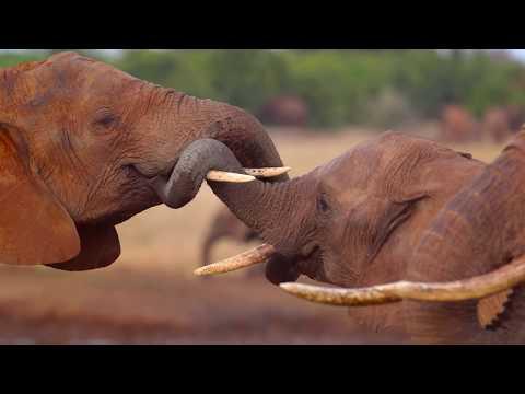 IFAW Elephants Program Trailer