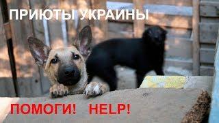 """Приют для собак (Запорожье) - """"Дай лапу, друг!"""" - полный выпуск"""