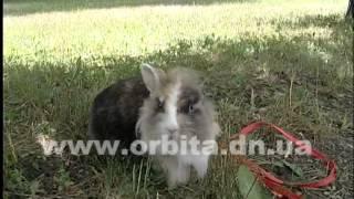 Львиноголовый кролик - хороший друг и товарищ