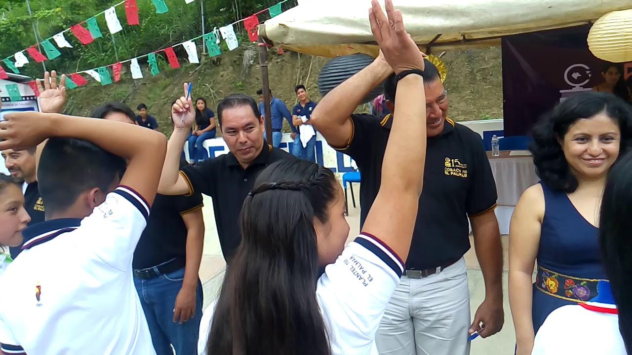 Download Dinamica de resiliencia 118 El Palmar