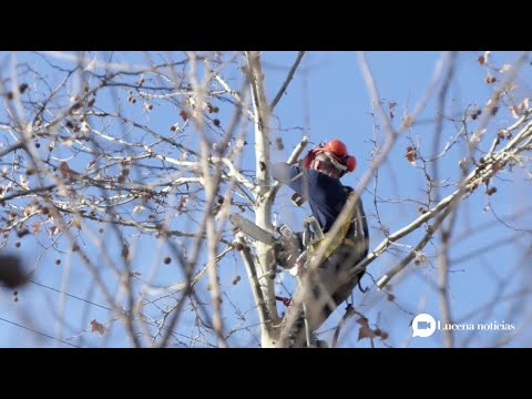 VÍDEO: Endesa tala arbolado en la zona del Cascajar para evitar los cortes de luz