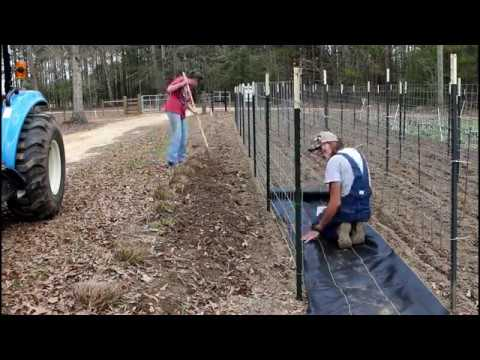 Garden Trellis ~ How to Make the BEST SUPPORTS for English Peas