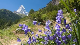 Peaceful music, Relaxming Music, Insturmental music 'The Swiss Alps' by Tim Janis