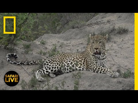 Safari Live - Day 280 | National Geographic