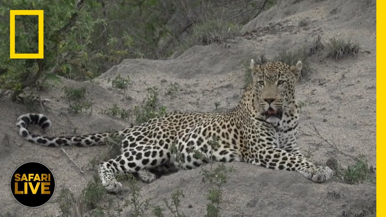 Safari Live - Day 280 | National Geographic