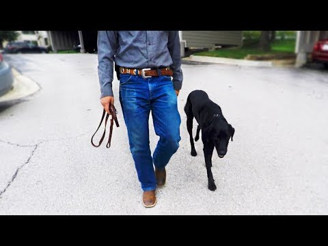 Without A Leash - Dog Walking