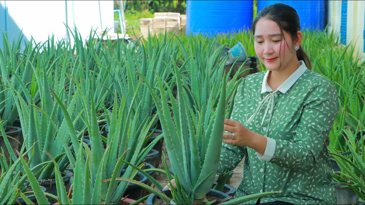 Aloe szemölcsök, Tüntesd el természetes módszerekkel a nemkívánatos bőrelváltozásokat