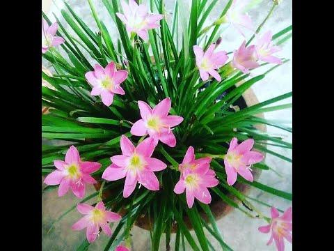 Çok Güzel Ama Ölümcül ! Dünyanın EN Zehirli 10 Bahçe Bitkisi.